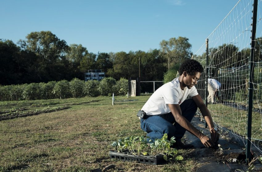 Why you Should Study A Master's In Agriculture